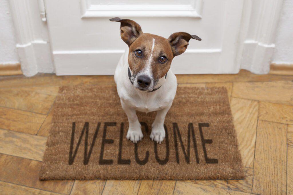 Домашни любимци в апартамента – какви са особеностите и какво е полезно да знаем